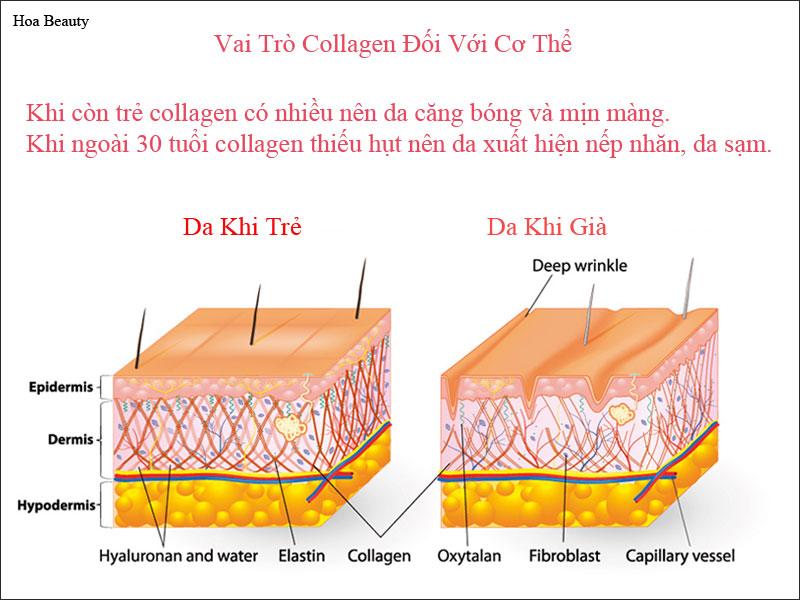 Vai trò của Collagen đối với cơ thể đặc biệt là làn da