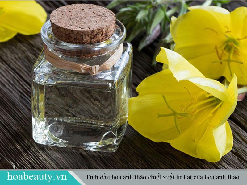 Tinh dầu hoa anh thảo được chiết xuất từ hạt của hoa anh thảo
