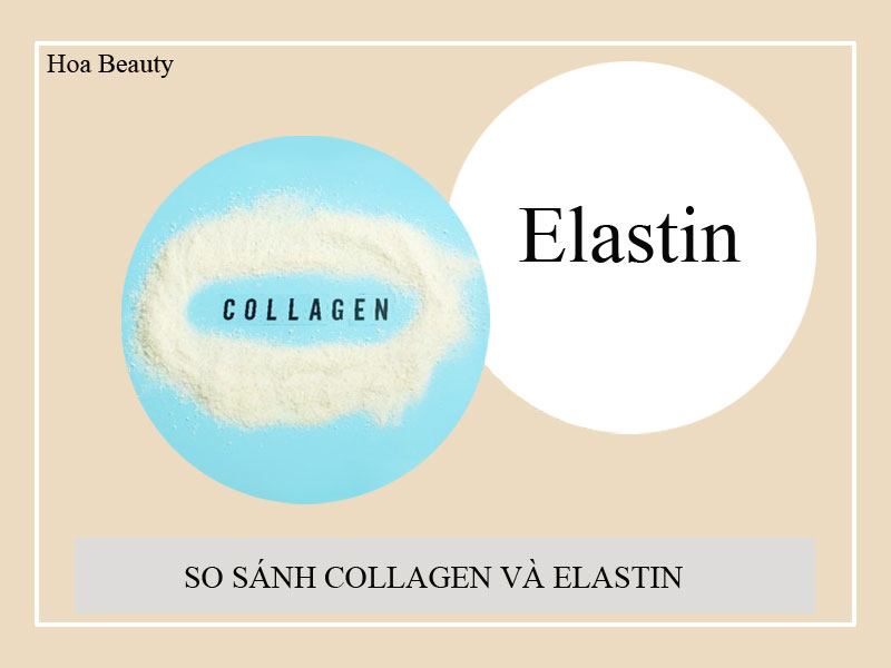 Collagen và Elastin liên kết giúp da đàn hồi, căng mịn và săn chắc